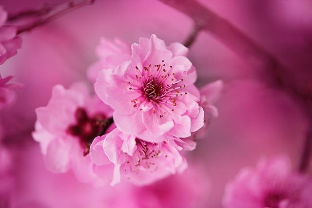 Flores, Rosa, Pink, Floral, Rose, Romantic, Pink Rose