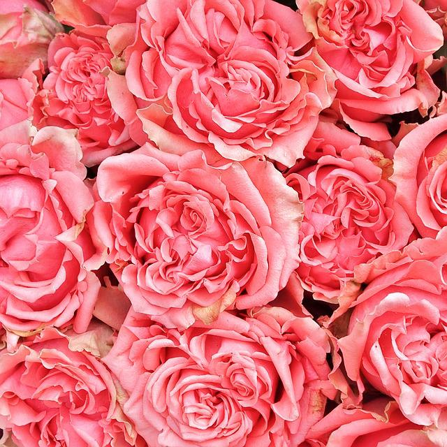 Bouquet Of Roses, Roses, Pink, Flowers, Flower