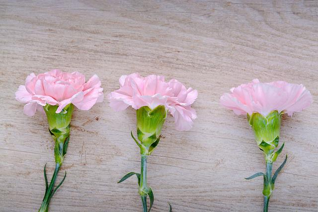 Cloves, Pink, Carnation Pink, Flowers, Three