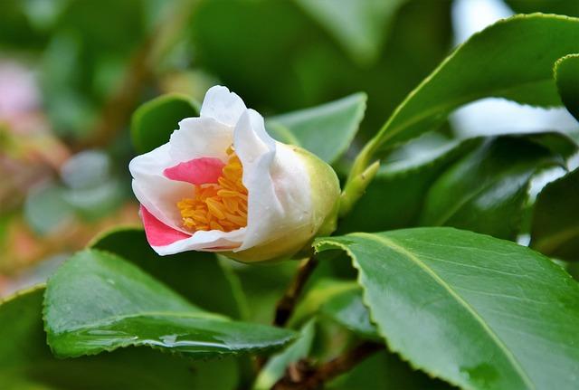 Flower, Blossom, Bloom, White Flower, Petals, Pistil