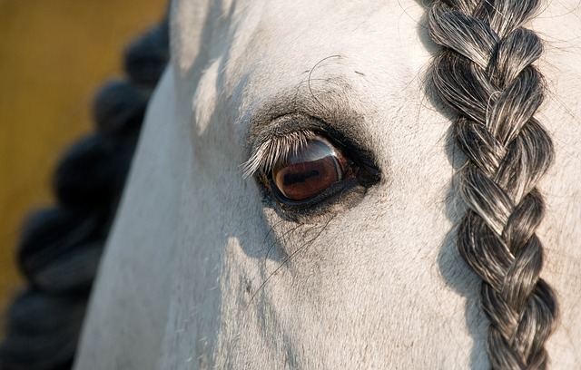 Horse, Eye, Look, Close Up, Plait