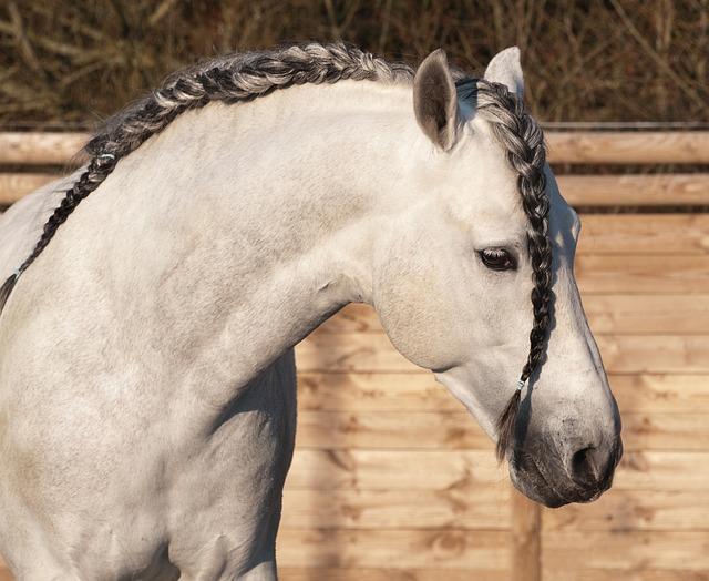 Horse, Plait, Mane, Head