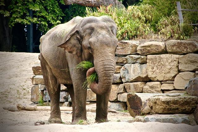 Planckendael, Elephant, Zoo