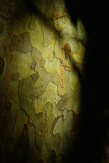 Plane, Bark, Tree, Tribe, Shadow Play, Light And Shadow