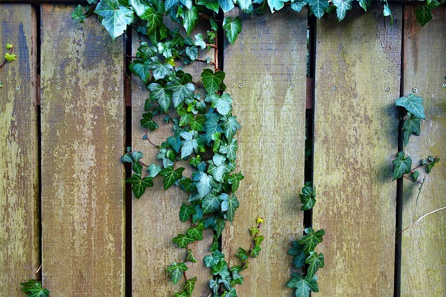 Fence, Wooden Fence, Plank, Garden Fence, Ivy, Plant