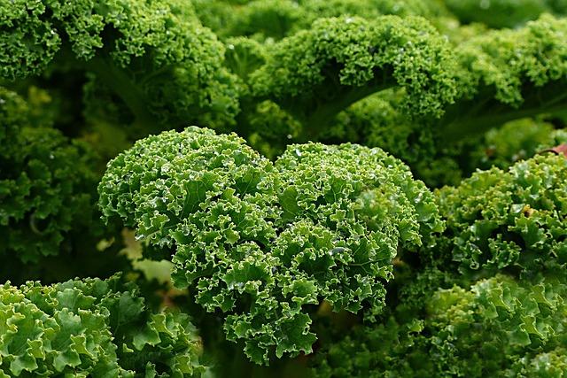 Plant, Kale, Autumn And Winter Vegetables, Garden