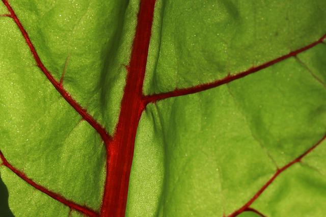 Leaf, Plant, Background, Chard, Herb Stalk, Leaf Vein