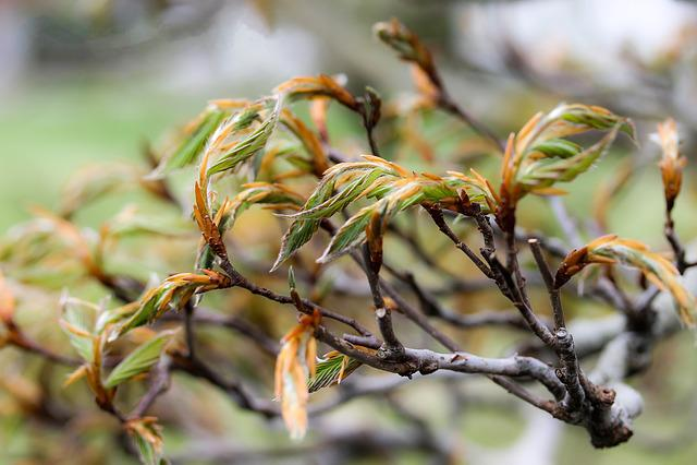 Beech Leaves, Wood, Plant, Beech Tree Drive, Spring
