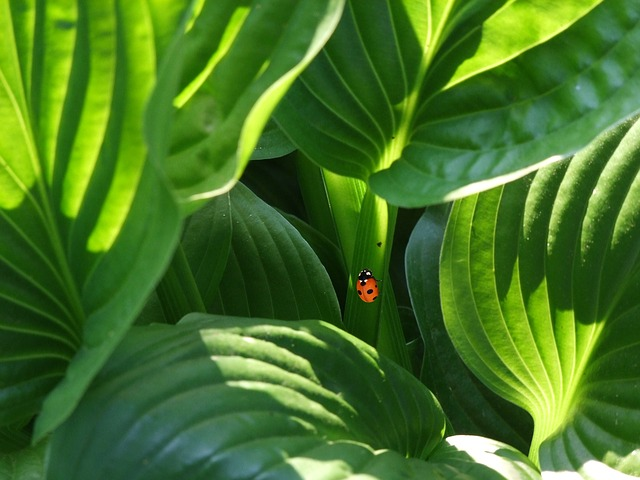 Ladybug, Beetle, Plant, Ornamental Plant, South Park