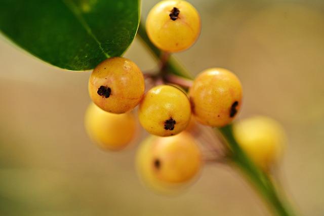 Berry, Fruit, Plant