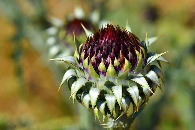 Flower, Asteraceae, Thistle, Blossom, Bloom, Plant