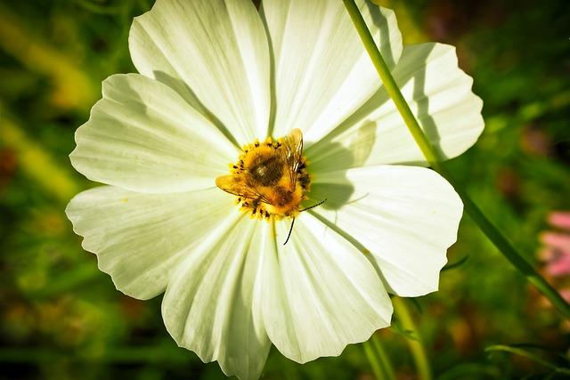 Chrysanthemum, Flower, Blossom, Bloom, Plant, Nature