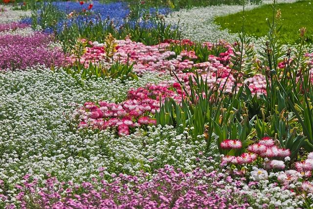 Flowers, Flower Meadow, Nature, Meadow, Bloom, Plant
