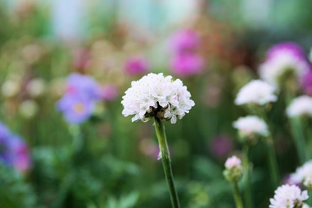Flower, Blossom, Bloom, Nature, Plant, Green, White