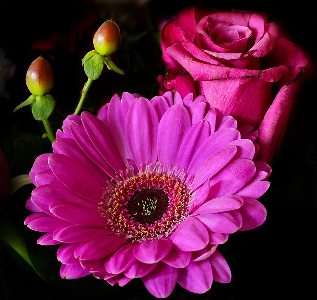 Flower, Rose, Blossom, Bloom, Plant, Pink, Gerbera