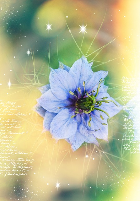 Virgin In The Green, Blue, Kind Of Buttercup, Plant