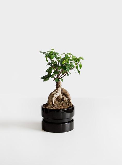 Bonsai, Plant, Bäumchen