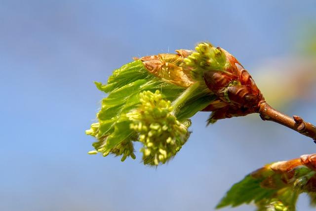 Blossom, Bud, Nature, Leaf, Plant, Close, Tree, Branch