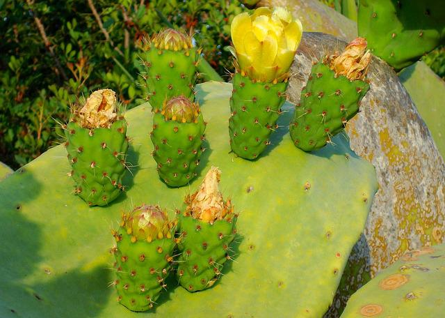 Cactus, Blossom, Bloom, Plant, Cactus Flowers, Yellow