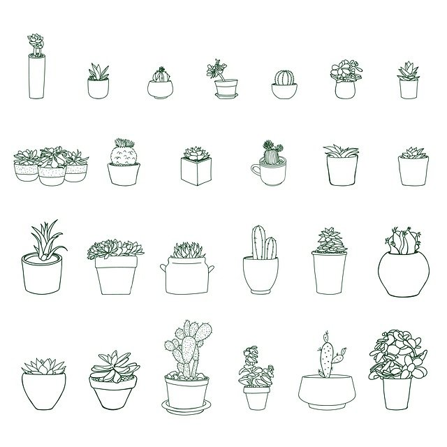 Plant, Nature, Pot, Potted, Succulent, Cactus, Cacti