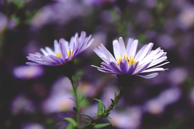 Flowers, Blossom, Bloom, Purple, Nature, Plant, Close