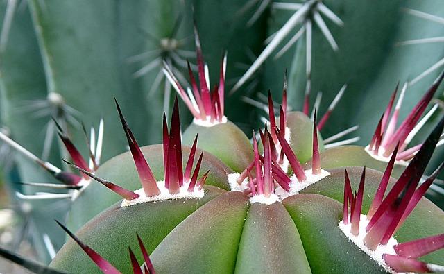 Cactus, Plant, Succulent Plant, Thorn, Close Up