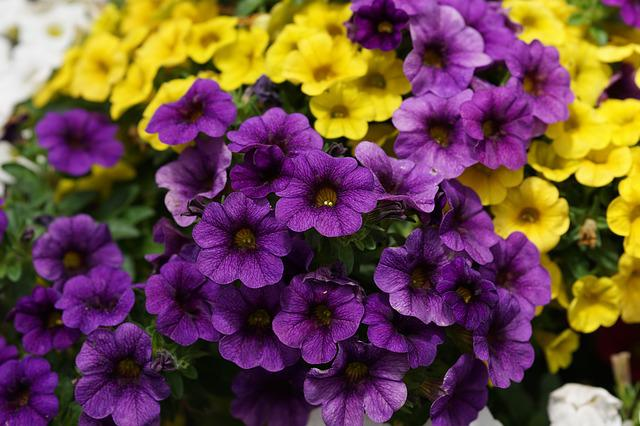Flowers, Nature, Colorful, Plant