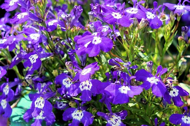 Flowers, Delicate Flower, Blue, Nature, Plant