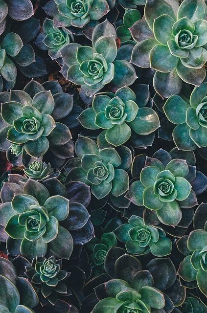 Succulent, Escheveria, Plant, Plant Growing, Arid