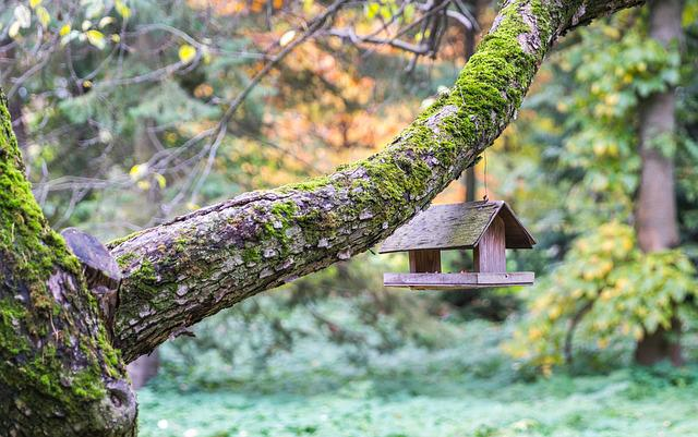 Tree, Nature, Wood, Sheet, Plant, Feeder, Branch