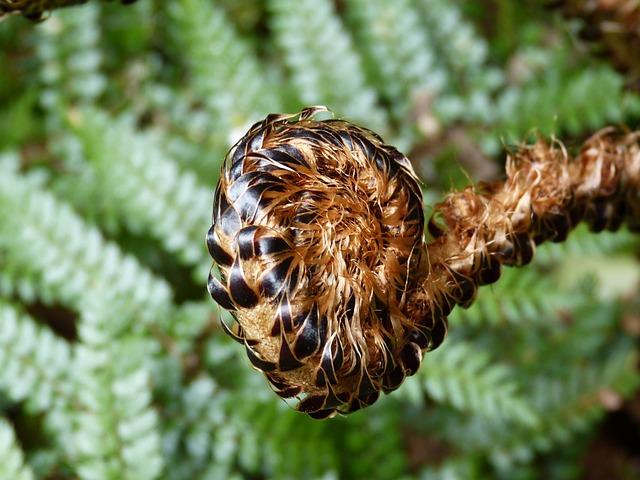 Fern, Green, Plant, Forest, Leaf, Nature, Bud