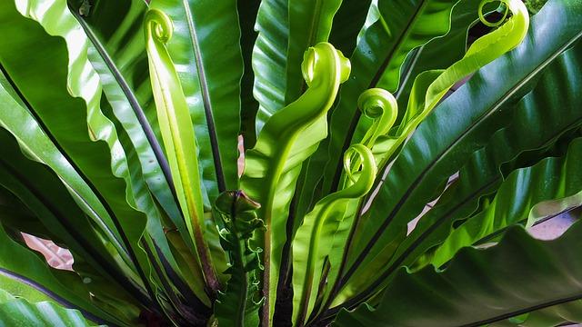 Fern, Plant, Green