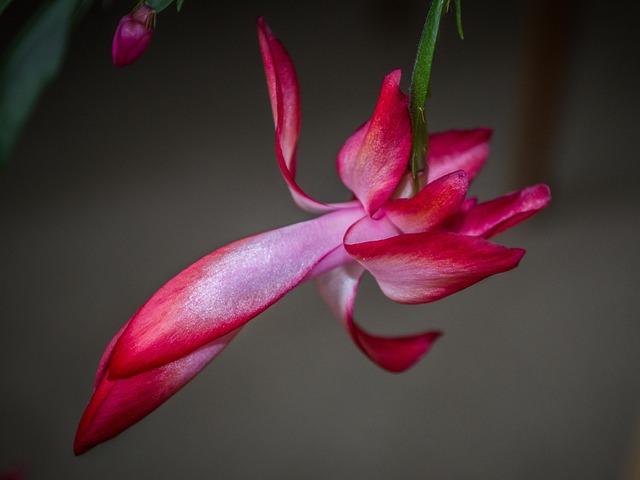 Flower, Cactus, Flowering, Flora, Plant, Macro