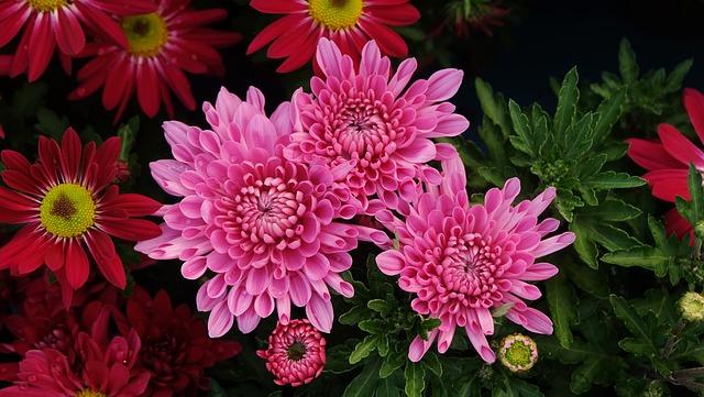 Flower, Nature, Plant, Flowers