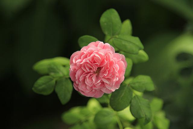 Flower, Plant, Nature, Leaf, Garden