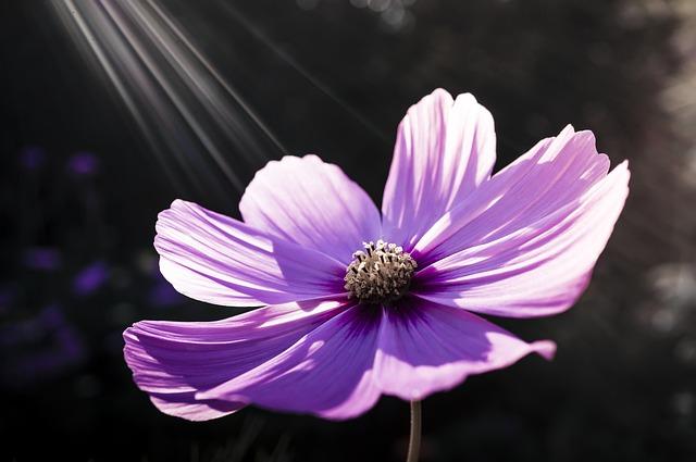 Flower, Flowers, Nature, Pink Flower, Spring, Plant