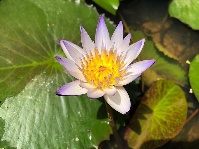 Plant, Nature, Foliage, Flower, Pond