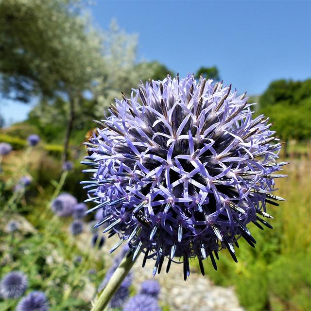Plant, Nature, Flower, Summer, Thistle, Garden