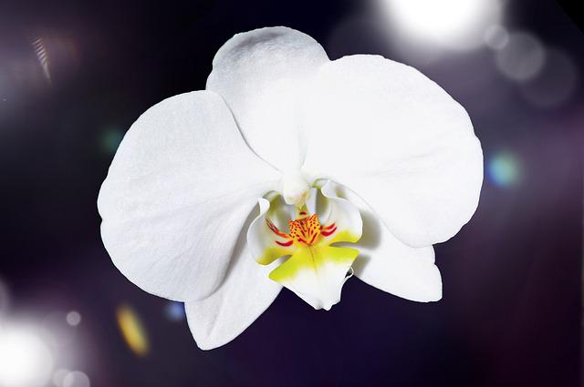 Orchid, Flower, Blossom, Bloom, White, Plant, Close
