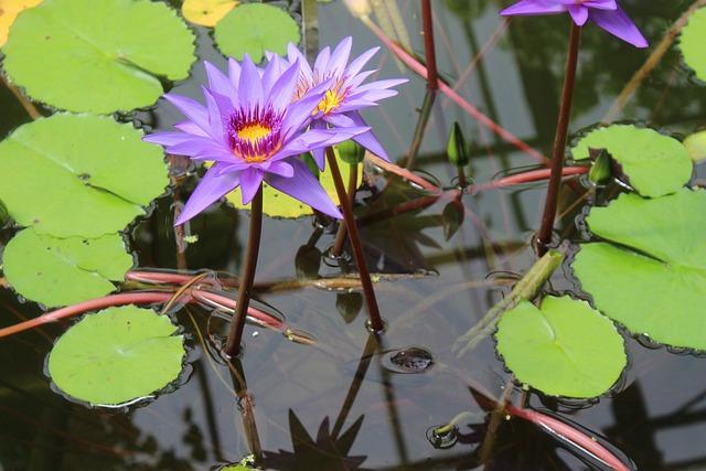 Plant, Nature, Flower, Leaf, Puddle, Blossom, Bloom