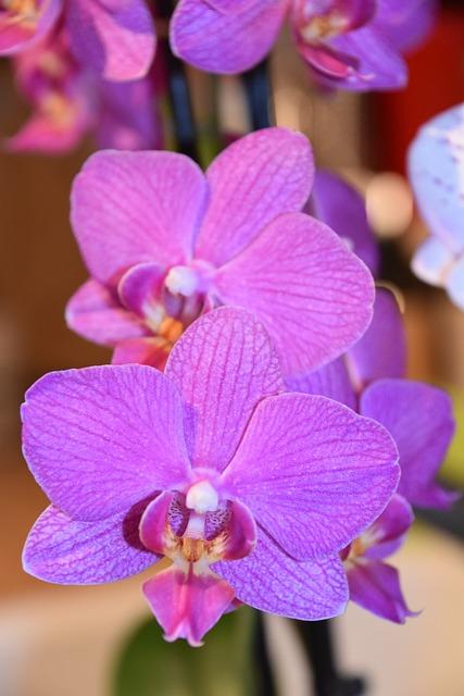 Flower, Plant, Nature, Tropical, Petal, Flowering