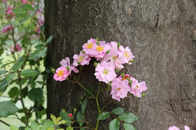 Flower, Tree, Flowers, Nature, Plant, Blooming