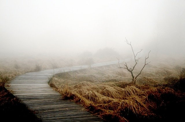 Fog, Autumn, Nature, Plant, Meadow, Mood, Atmosphere