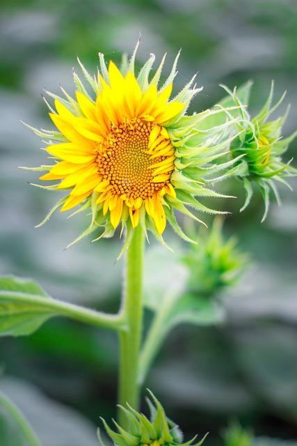 Flowers, Plant, Nature, Fresh Flowers, Colors
