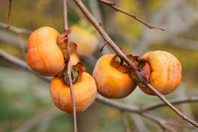 Nature, Plant, Branch, Bush, Kaki Plum, Garden, Fruit