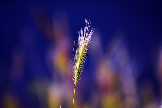Plant, Alone, Garden, Green, Mood, Plant Nature, Color