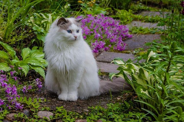 Nature, Flower, Garden, Plant