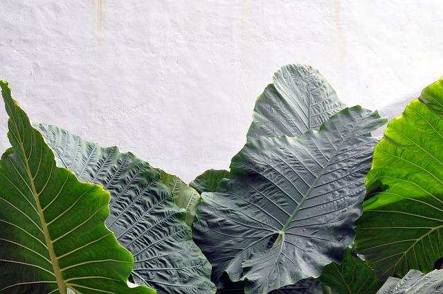 Anthurium Leaf, Green, Foliage, Plant