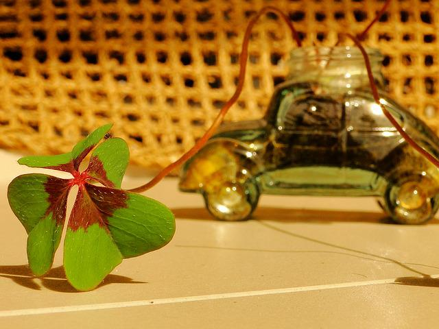 Clover, Luck, Fusca, Green, Leaf, Plant