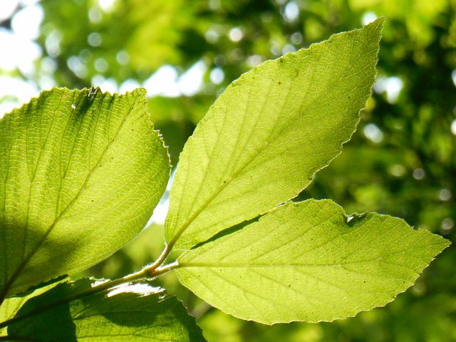 Young Leaves, Green, Plant, Natural
